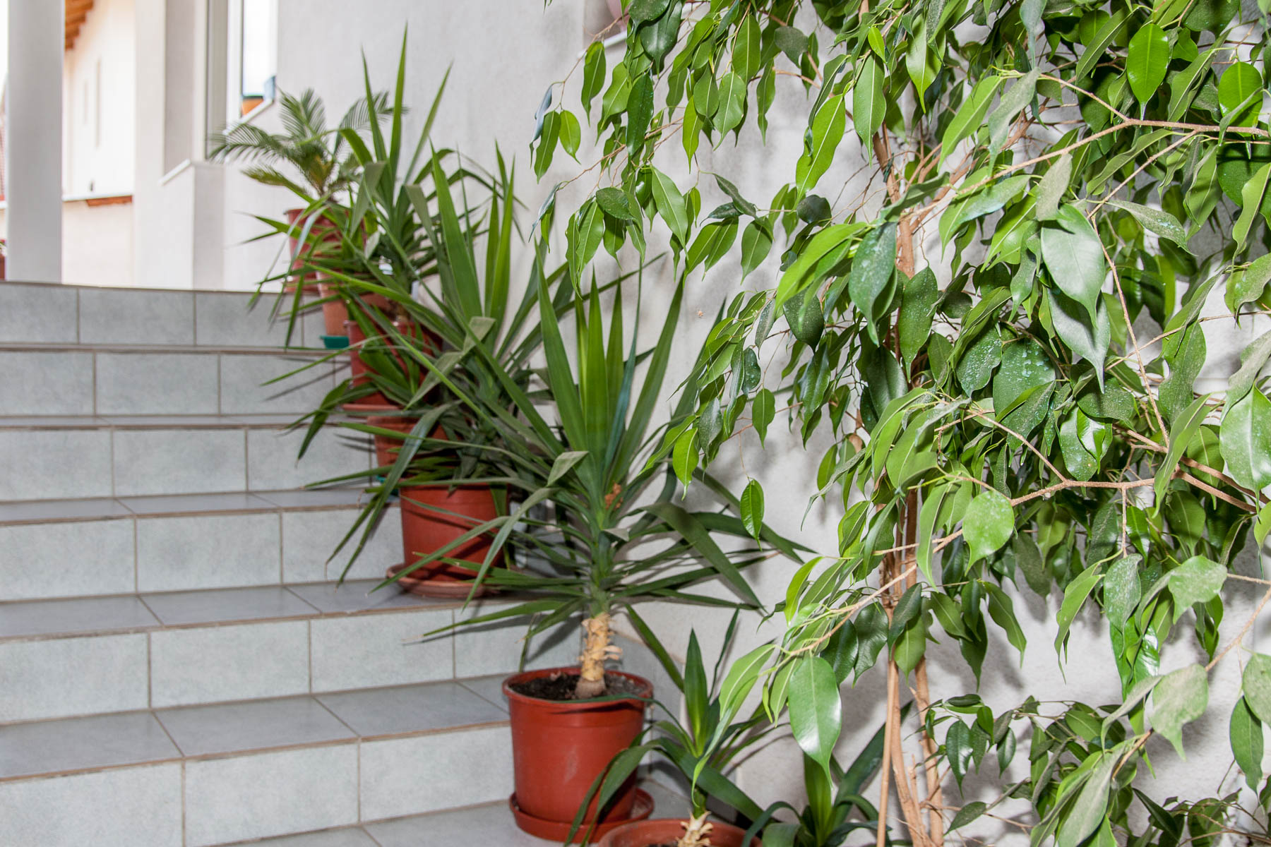 Stairs with plants
